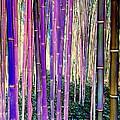 Beautiful Bamboo by Ed Weidman