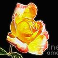 Beautiful Blooming Yellow Rose by Mariola Bitner