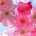 Beautiful Blooms by Catherine Lott