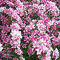 Beautiful Blossoms by Aimee L Maher ALM GALLERY
