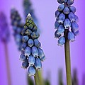 Beautiful Blue by Clare Bevan