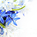 Beautiful Blue White Flower by Boon Mee