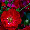 Beautiful Bouquet by Frozen in Time Fine Art Photography