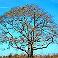 Beautiful Branching by Debra Martz