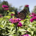 Beautiful Butterfly by Bailey Barry
