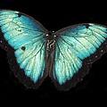 Beautiful Butterfly by Glenn Aker