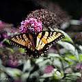 Beautiful Butterfly by James Barrere