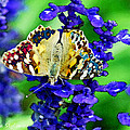 Beautiful Butterfly On A Flower by Augusta Stylianou