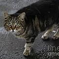 Beautiful Cat by Michael Paskvan
