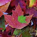 Beautiful Colors Of Fall by Scotty Alston