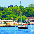 Beautiful Day For Sailing by Judy Palkimas