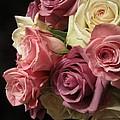 Beautiful Dramatic Roses by Tara  Shalton