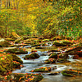 Beautiful Fall View In Tennessee by Cynthia Kidwell