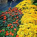 Beautiful Flower Garden Bellagio Las Vegas by Edward Fielding