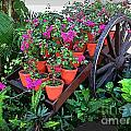 Beautiful Flower Wagon by John Malone