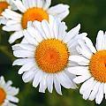 Beautiful Flowers by Brett Beaver