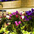 Beautiful Flowers Inside The Changi Airport by Ashish Agarwal