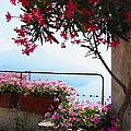 Beautiful Flowers Of Ravello Italy by Irina Sztukowski