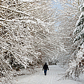 Beautiful Forest In Winter With Snow Covered Trees by Matthias Hauser