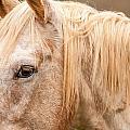 Beautiful Gray Horse Portrait by Alex Grichenko