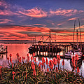 Beautiful Harbor by Beth Sargent