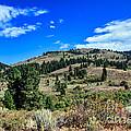 Beautiful Hillside by Robert Bales