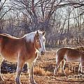 Beautiful Horses by James BO Insogna