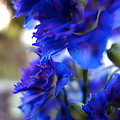 Beautiful In Blue by Jacqueline Athmann