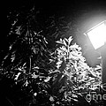 Beautiful Lamp Light In The Dark by Fatemeh Azadbakht