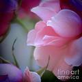 Beautiful Lavender And Purple Roses by Tara  Shalton