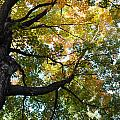 Beautiful Leaf Blanket by Tammy Burgess