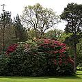 Beautiful Muckross Gardens In Spring by Christiane Schulze Art And Photography