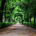 Beautiful Park At Schonbrunn Palace In Vienna Austria by Aleksandar Mijatovic