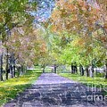 Beautiful Pathway by Kathleen Struckle