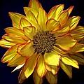 Beautiful Petals by Kristina Deane