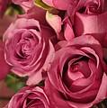Beautiful Pink Roses 6 by Tara  Shalton