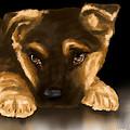 Beautiful Puppy by Veronica Minozzi