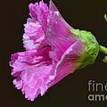Beautiful Purple Flower by Donna Greene
