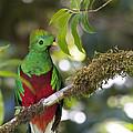 Beautiful Quetzal 1 by Heiko Koehrer-Wagner