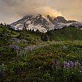 Beautiful Rainier Wildflower Meadows by Mike Reid
