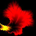 Beautiful Red And Yellow Floral Fractal Artwork Square Format by Matthias Hauser