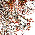 Beautiful Rowan 1 - Square by Alexander Senin