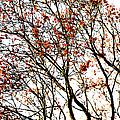 Beautiful Rowan 3 by Alexander Senin