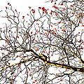 Beautiful Rowan 6 - Square by Alexander Senin