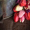 Beautiful Spring Tulips by Edward Fielding