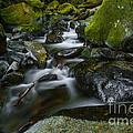 Beautiful Stream by Vishwanath Bhat