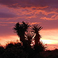 Beautiful Sunset In Arizona by James Welch