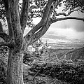 Beautiful Tree Looking Down On A Tropical Valley by Edward Fielding