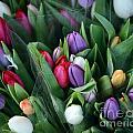 Beautiful Tulips Bouquet by Aleksandar Mijatovic