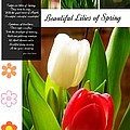 Beautiful Tulips Series 2 by Joan-Violet Stretch